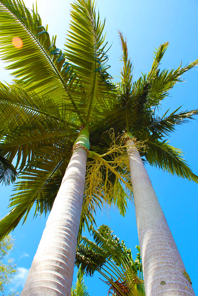 palm tree copy