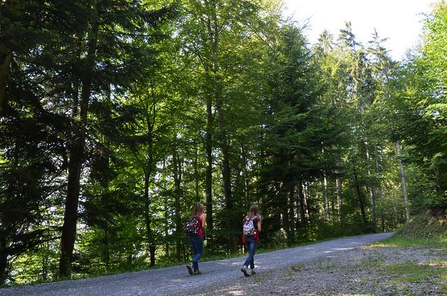 Sendero de árboles camino de la casa de Heidi