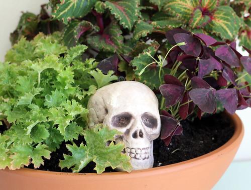 Halloween Dish Garden