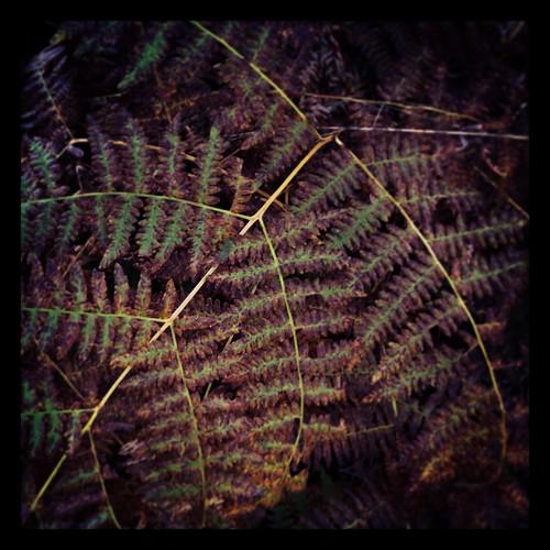lindas by Nature Morte