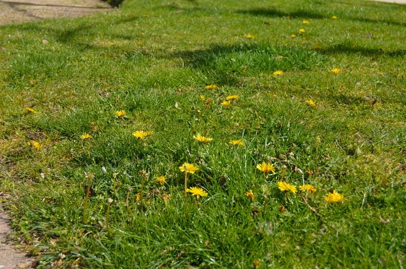 lara-vazquez-madlulablog-flowers