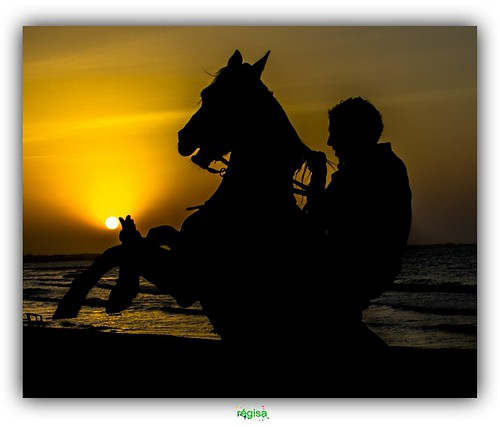 sunset horse beach cheval soleil tunisia djerba coucher plage tunisie dardjerba platinumheartaward