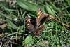 Butterflies... er...