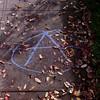 Autumnal Anarchy