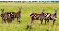 tsavo national park, kenya