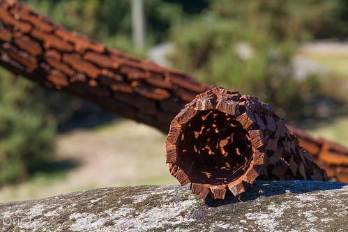 22 canon côtesdarmor france armorique artmoderne breizh bretagne brittany eos pipeline rouille rust sculpture stantoinelanrivain