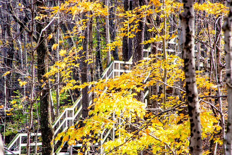 Fort Harrison State Park - Warbler Woods Nature Preserve - November 4, 2016