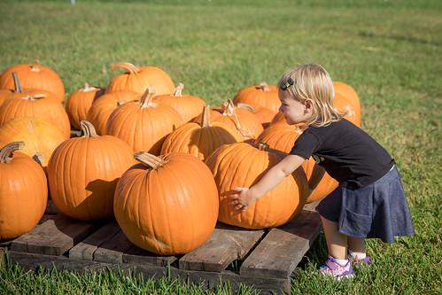 Pumpkin Patch-2