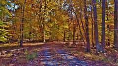 South Tract Autumn Scene 2016