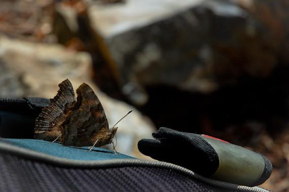 20120412-DSC_6073butterfly