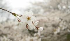 Spring cliché