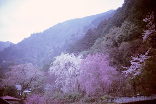 20110413東京山梨IIIa_AGFA_HDCplus400_022