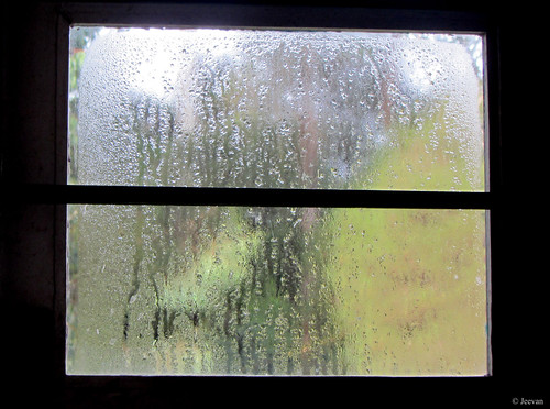 Window's pane