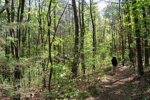 Pictures showing the wooded forest with pines and oaks along the trail along at ridge at Piney Creek Wilderness.