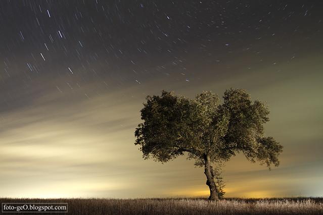 El viento de la noche