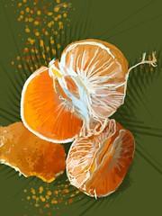 [免费图片素材] 图形, 插图, 水果, 橙 ID:201204210600