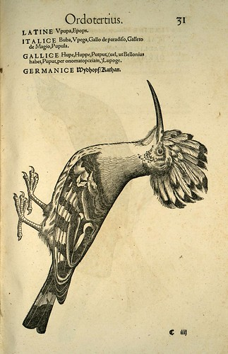 008-Abubilla-Icones animalium- (1553)- Conrad  Gesner- SICD Strasbourg