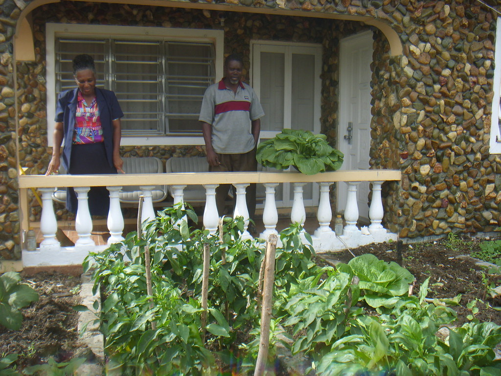 hoping to save millions antigua turns to backyard gardening