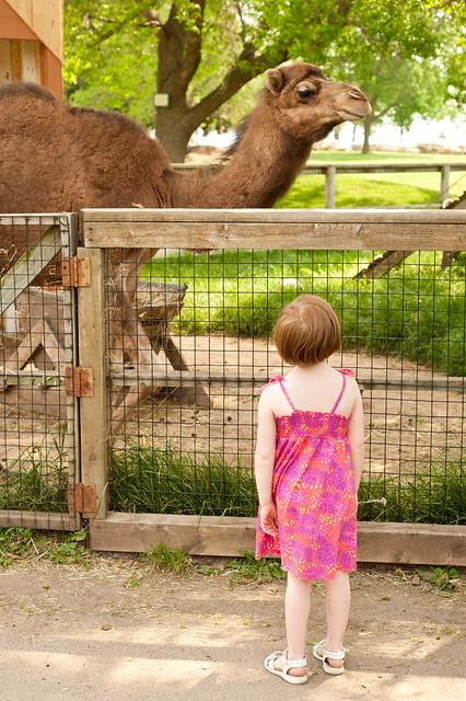 Zoo9 (1 of 1)