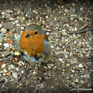 My Mate Robin