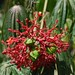 fleurs et plantes du Costa-Rica / flowers and plants in Costa Rica