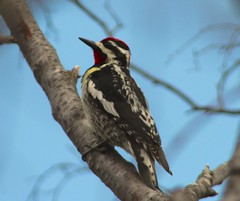 animal, branch, wing, fauna, piciformes, beak, bird,