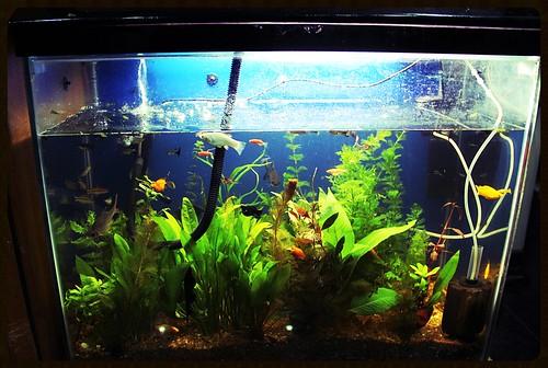 Marziya Shakirs Fish Tank by firoze shakir photographerno1