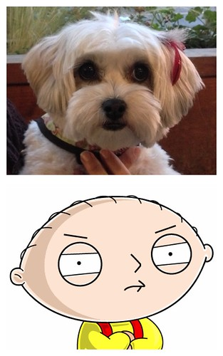 Penny's head is the same shape as Stewie's