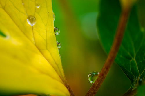 Sunlight and raindrops