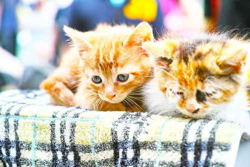 kittens-SDIM0186