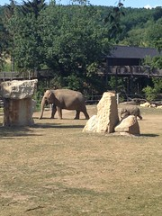 Jardín zoológico de Praga