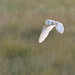 Barn Owl by Full Moon Images