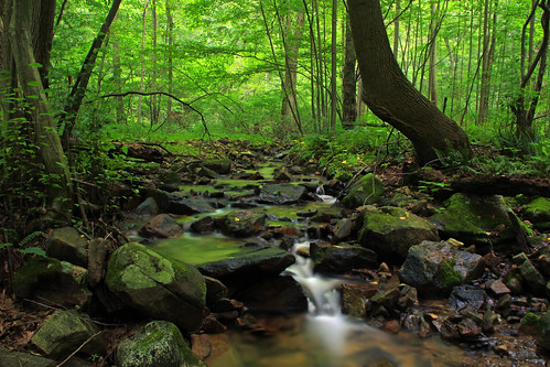 trees summer creek waterfall moss lowlight rocks stream hiking pennsylvania falls cascades creativecommons ravine deciduous lancastercounty lancastercountyconservancy textermountainnaturepreserve harnishrun