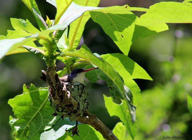 En el nido.
