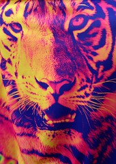 art, big cats, tiger, roar, illustration,