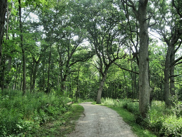 Hannaford Woods path 20130826