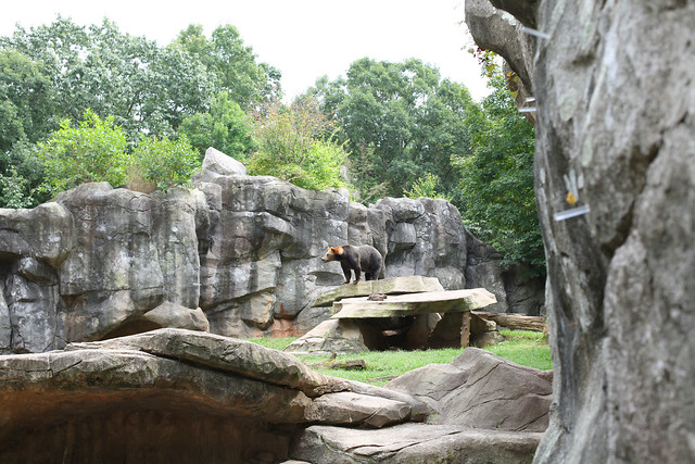 zoo_grizzly bear