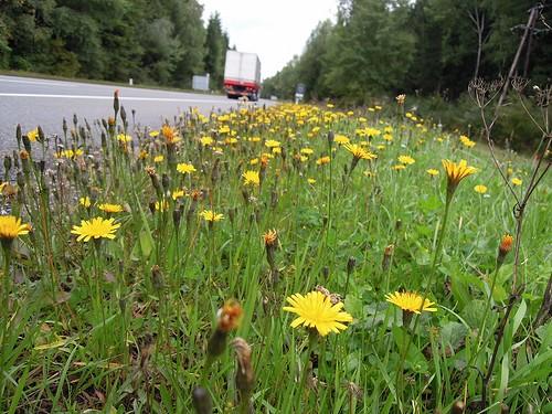 街道沿いの花
