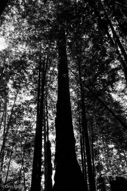 06Jul2013_redwoods-2652