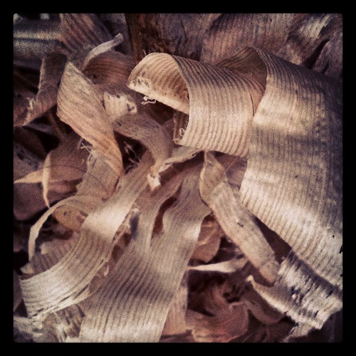 shavings by Nature Morte