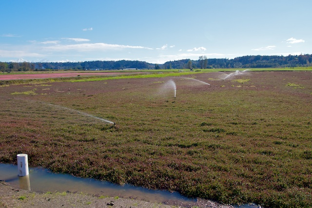 Cranberry Bog in Langley