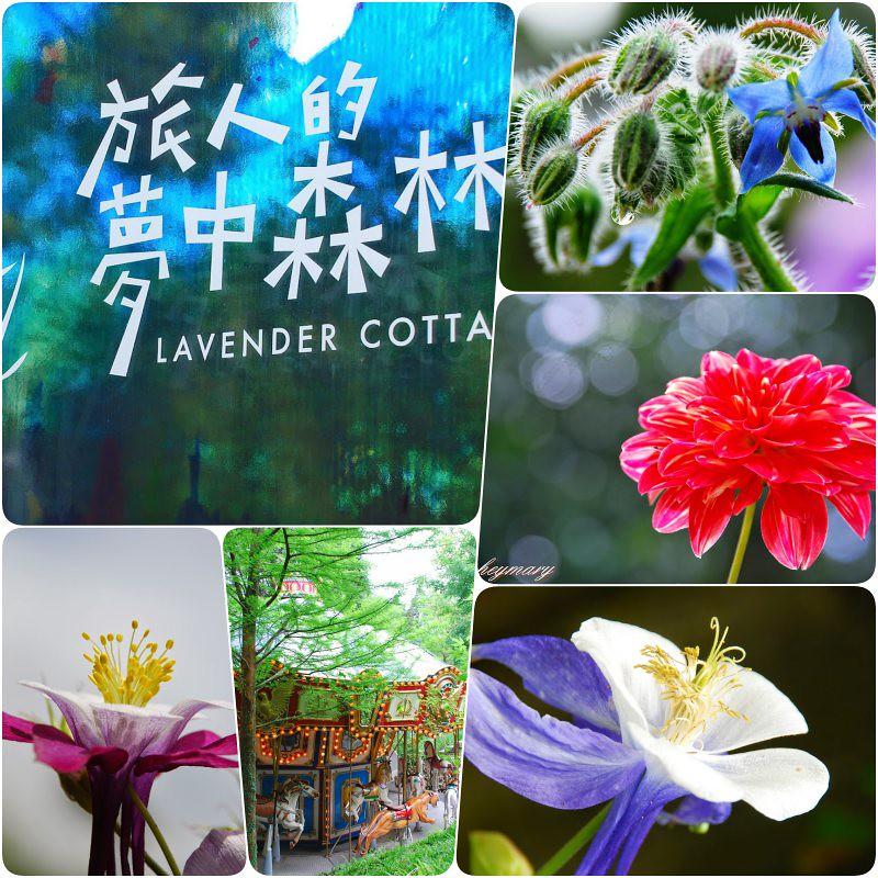 旅人的夢中森林|台中新社薰衣草森林