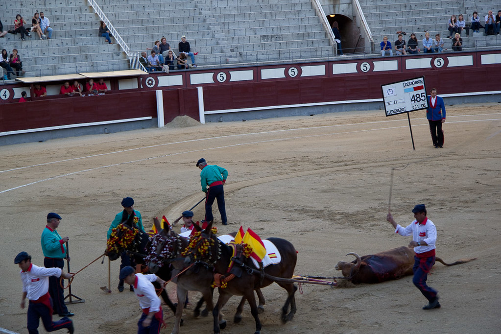 Watching a bullfight in Spain