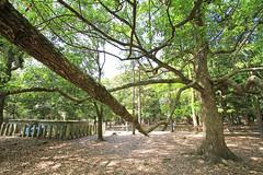 Parks & Shrines Nara