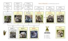 Gorilla Family - Basel (2015) Version 1