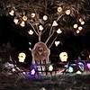 Runnemede Halloween Graveyard #halloween #graveyard #decoration #lights