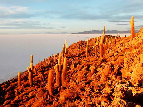 Cactus in Fish island at sunrise - Uyuni salt lake - Bolivia