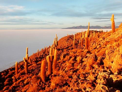 Cactus in Fish island at sunrise - Uyuni salt lake - Bolivia
