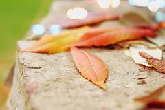 Herbstfarben: Blätter