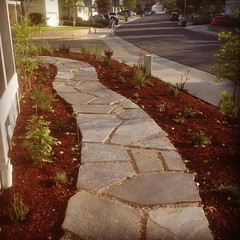 Flagstone stepping stones set in cement. Pea gravel acts as 'grout' for good drainage and was part of the requirements for a low water garden rebate. #lakeforest #alfordsgardens #frontentrancemakeover #gardenlife #garden #businesswoman #womenpreneur #wome